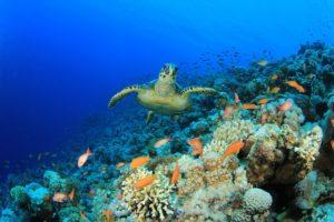 Entreprises engagées biodiversité environnement